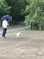 雨のお付き合い