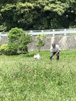 暑い中のボール遊び