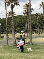 藤沢辻堂海浜公園