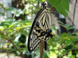 懐っこい蝶