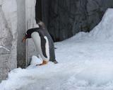 反省ペンギン