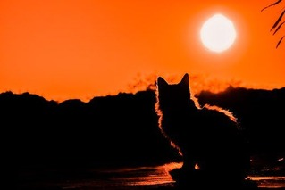 sunset-3008779__340