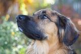 dog-3843574__340