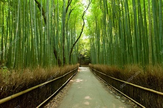 depositphotos_6809641-stock-photo-bamboo-grove