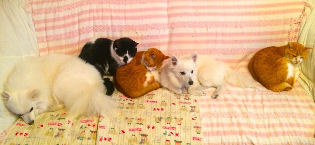 f93894c5a1a8 ウチの犬猫 家族紹介します : シェビーズのブログ