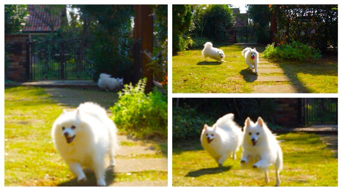 284480811a1d 庭の芝生、やっと生え揃いました! : シェビーズのブログ