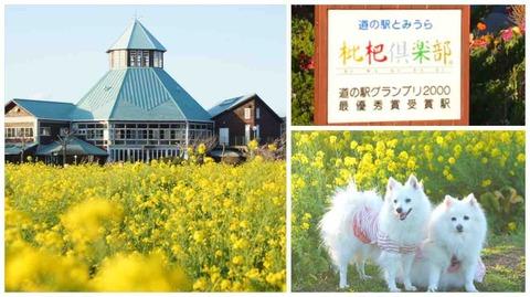 1bbb664c76dd 犬OKのレストラン&カフェ : シェビーズのブログ