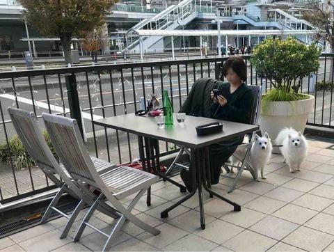 43b840a3a5a1 普段はテラス席は用意されていませんが、店のスタッフに「犬連れなのでテラス席を利用したい」と伝えるとテーブルと椅子を並べていただけます。