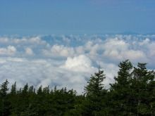 雲の上のキノコ狩り