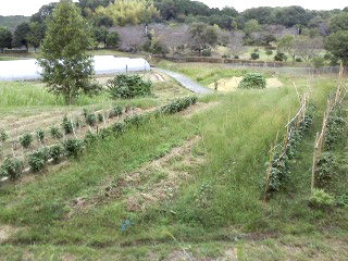 自然栽培農法 矢田山自然塾
