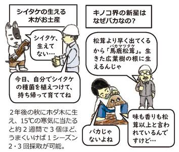 マツヤマ再生プロジェクト3
