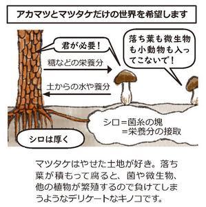 マツヤマ再生プロジェクト2
