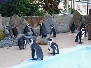 ペンギン・ファミリー