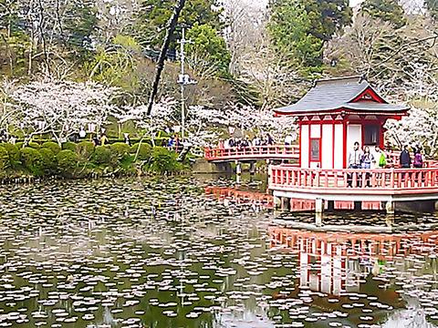 千葉の絶景さくらスポット 茂原公園