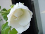 2012_0602_144727-DSC02712