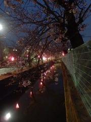 20160331福万寺付近夜の桜並木2