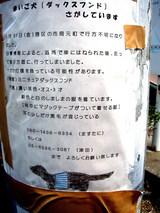 探し犬の張り紙