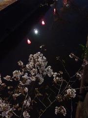 20160331福万寺付近の夜桜
