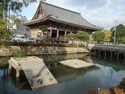 亀の姿が見られた11月18日の四天王寺亀の池