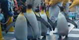 2009年1月海遊館ペンギンパレードの様子