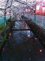 川面に映る雪洞の灯り