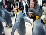ペンギンパレード5