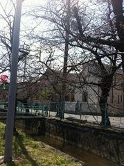 20160326北山本5丁目付近の桜