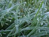 草に降りた霜の様子2