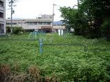 草原化した公園3