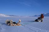 北極圏遠征時の犬橇との写真