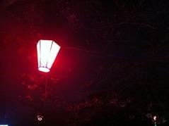 20160328北山本五丁目付近の夜桜