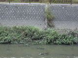 増水の跡が残る恩地川護岸