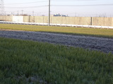 霜が降りた今朝の田んぼの様子