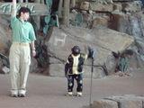 チンパンジー5