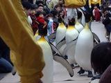 ペンギンパレード3