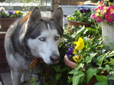 花とジュディ