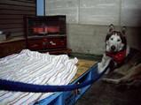 2/9外は雪なので工場の中で暖をとるジュディ