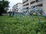草原化した公園1