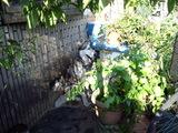 小屋の前で座るジュディ