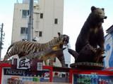 トラ、ワニ、クマの剥製