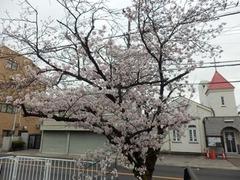 20160401福万寺付近の桜