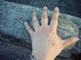 クサガメの大きさ測定(縦方向)