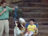 男の子と犬2