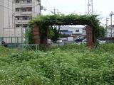 草原化した公園2