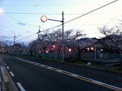 玉串川沿いの桜並木