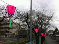 2013年3月21日玉串川の桜2