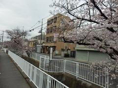 20160401福万寺から北側の桜