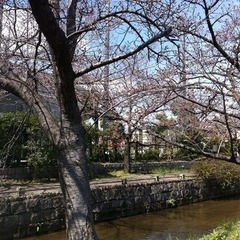20160326山本球場傍の桜
