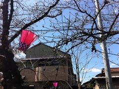 20160326北山本5丁目付近の桜2