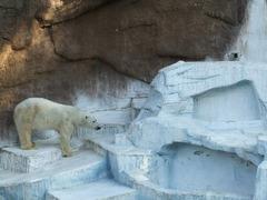 白熊ゴーゴとバフィン